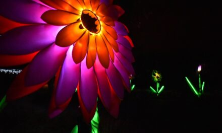 BOOK TICKETS FOR THE LIGHT FESTIVAL IN TRUMBLE GARDENS