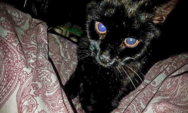 CALL FOR ONE WAY AFTER POPULAR CAT'S DEATH