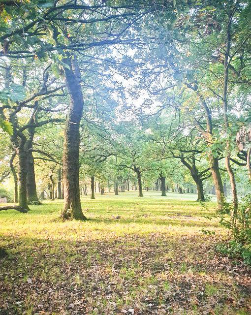 Council admits sale of 'public open space'