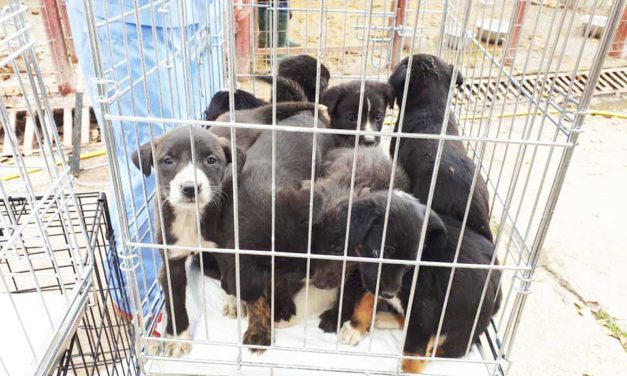 Food donation appeal for abandoned Romanian pups