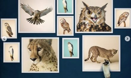Photographer auctions art for NHS