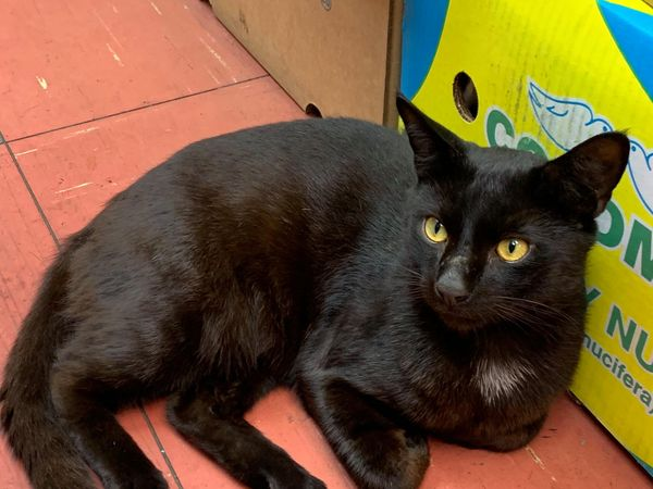 Well Known Thornton Heath Cat Stolen