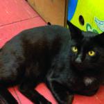 Hunt for Beloved Stolen Shop Cat