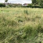 Reduced grass cutting regime leaves Croydon in the wilderness